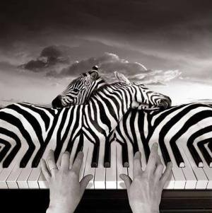 piano zèbres source inconnue