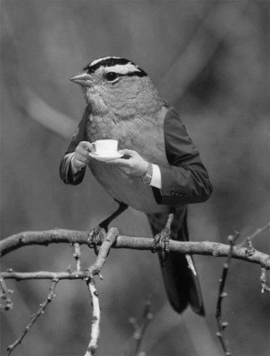 Oiseau café by Cultura Inquieta