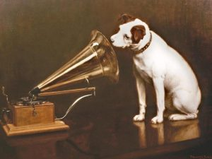 gramophone chien