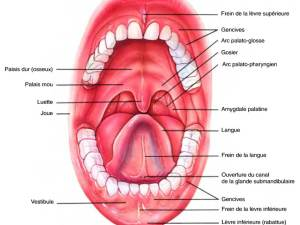 bouche croquis