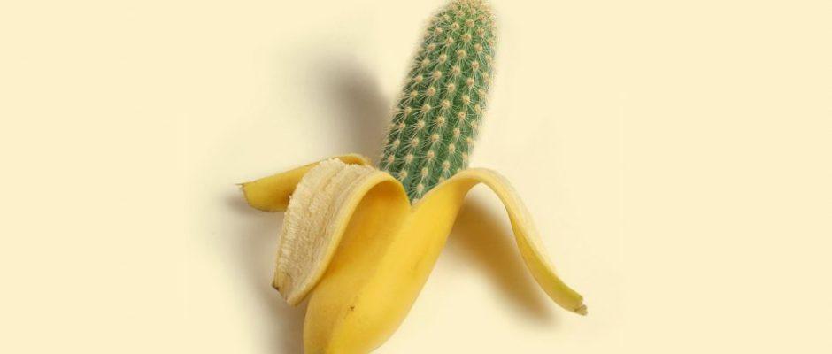 banane cactus